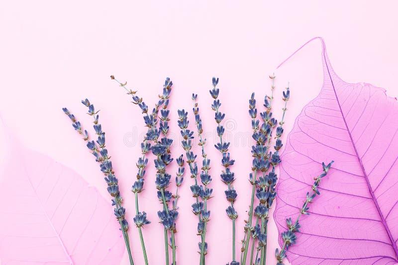 淡紫色和桃红色干燥叶子在桃红色背景 单色co 库存照片