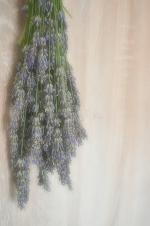淡紫色在光的花束花 免版税库存图片