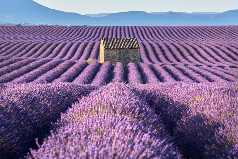 淡紫色在有石房子的Valensole调遣在夏天 上普罗旺斯阿尔卑斯省,法国 库存图片
