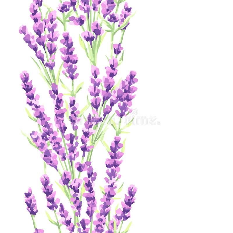 淡紫色开花无缝的样式 普罗旺斯草本的水彩自然例证 库存例证