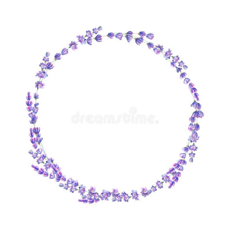 淡紫色开花紫色在白色背景隔绝的水彩圆的框架 库存例证