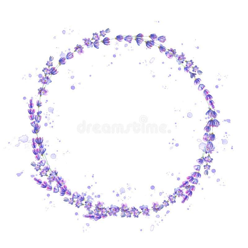 淡紫色开花紫色在白色背景隔绝的水彩圆的框架 向量例证