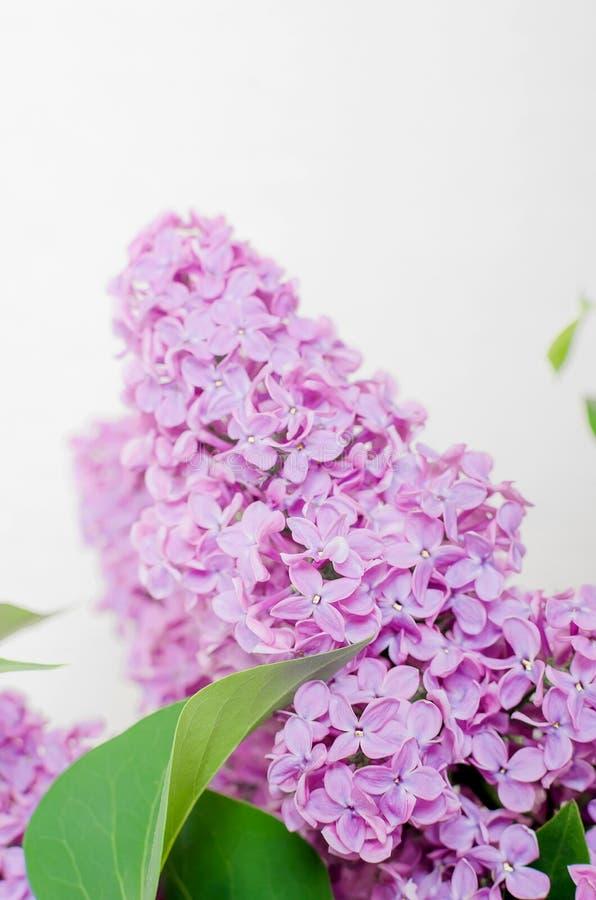 淡紫色美丽的花 图库摄影