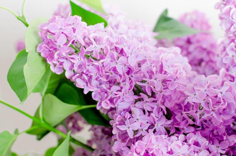 淡紫色美丽的花 免版税库存照片