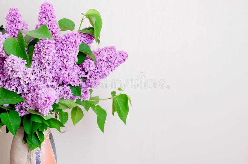 淡紫色美丽的花 库存照片