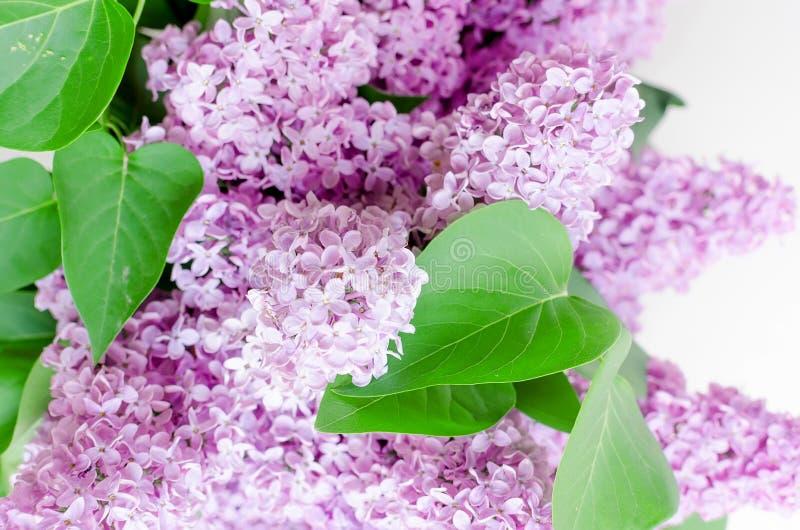 淡紫色美丽的花 免版税库存图片