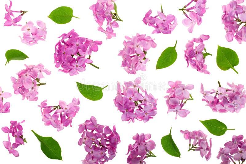 淡紫色花、在白色背景隔绝的分支和叶子 平的位置 顶视图 免版税库存图片