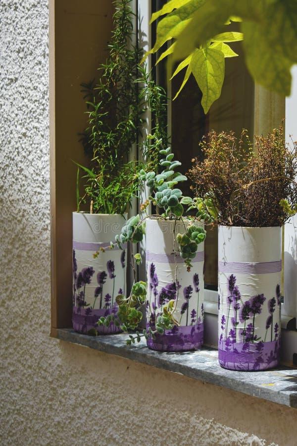 淡紫色花和多汁植物在罐在窗台 库存图片