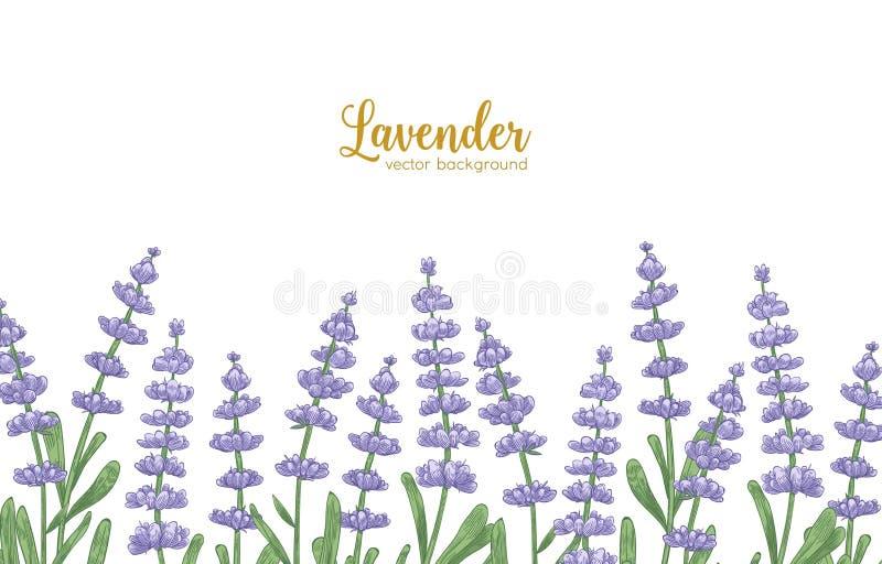 淡紫色花和绿色叶子装饰的典雅的水平的背景 与美好开花的自然本底 皇族释放例证