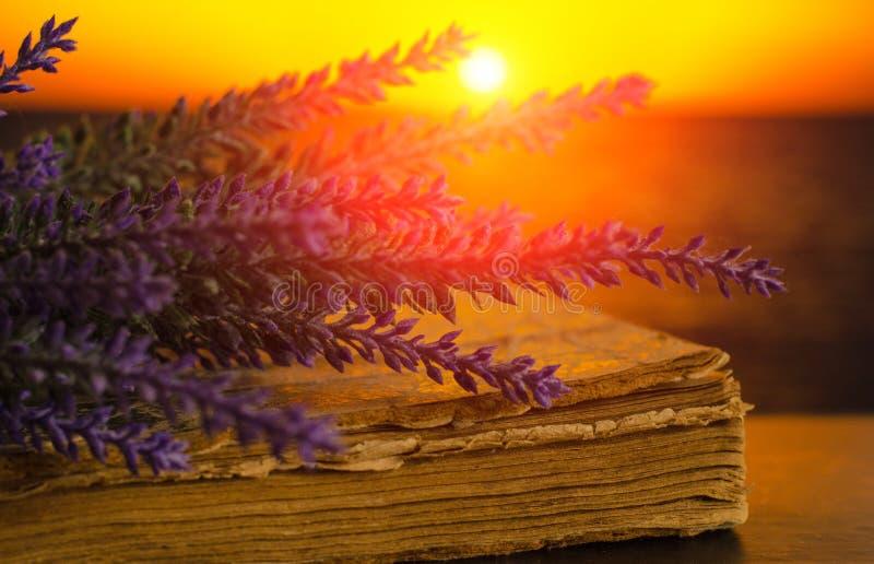 淡紫色花束在日落的旧书说谎 库存图片
