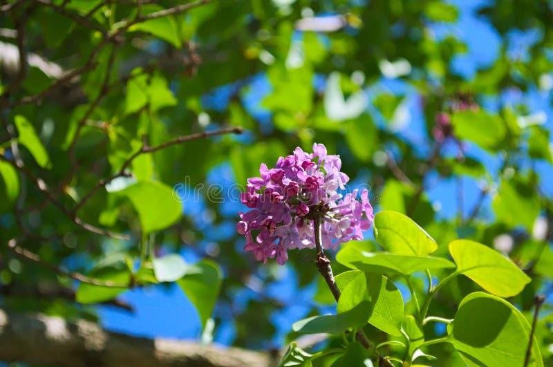 淡紫色花特写镜头 库存照片