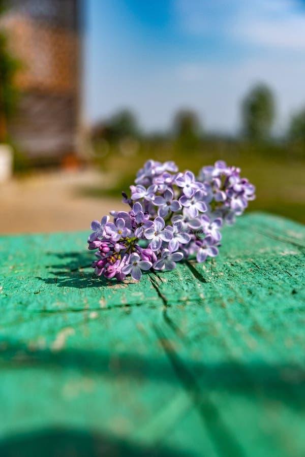淡紫色花绿色晴天蓝色 库存照片
