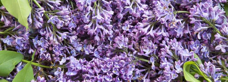 淡紫色花花束,特写镜头 免版税库存图片
