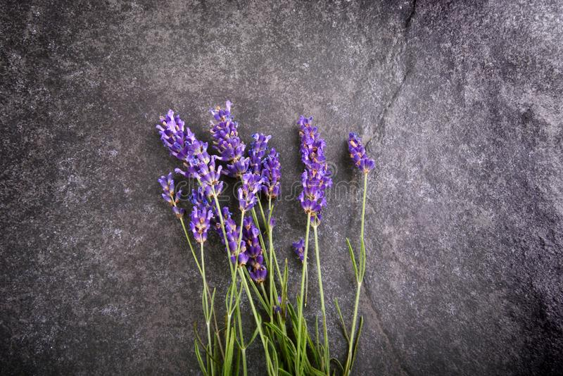 淡紫色花花束 图库摄影