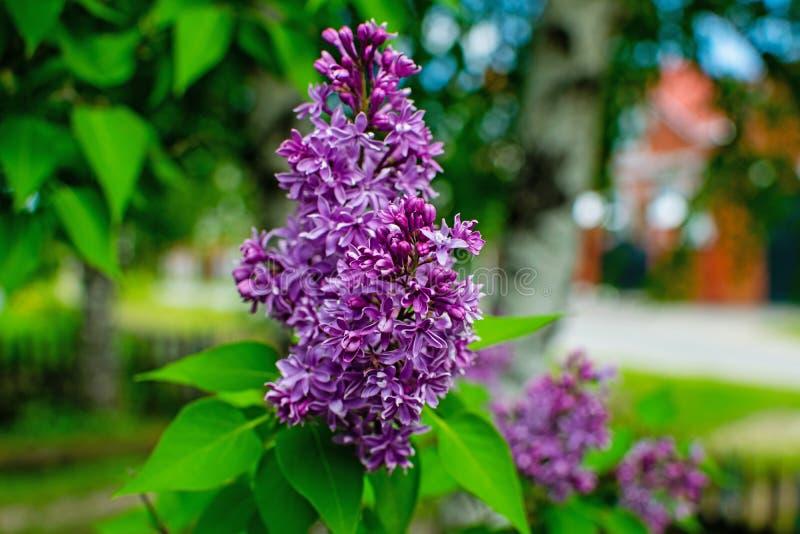 淡紫色花 E 库存图片