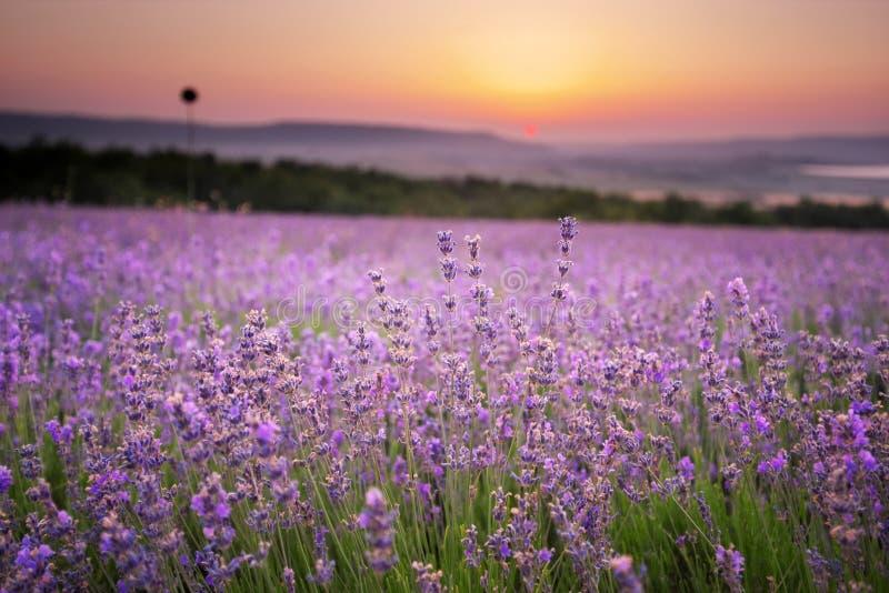 淡紫色草甸 库存照片