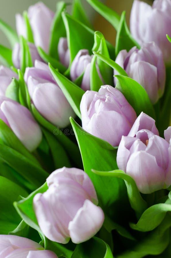 淡紫色郁金香花束  免版税库存图片
