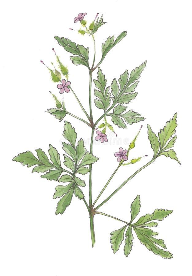 淡紫色野花的水彩植物的例证 向量例证