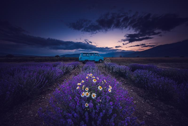 淡紫色领域和不尽的行,日落 老公共汽车搬运车 免版税库存照片
