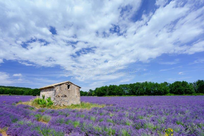 淡紫色领域欧特普罗旺斯法国 图库摄影