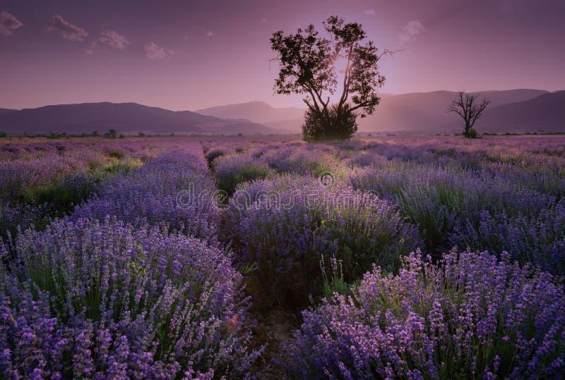 淡紫色领域 淡紫色领域的美好的图象 夏天日落风景,不同的颜色 黑暗的云彩,剧烈的日落 免版税库存照片