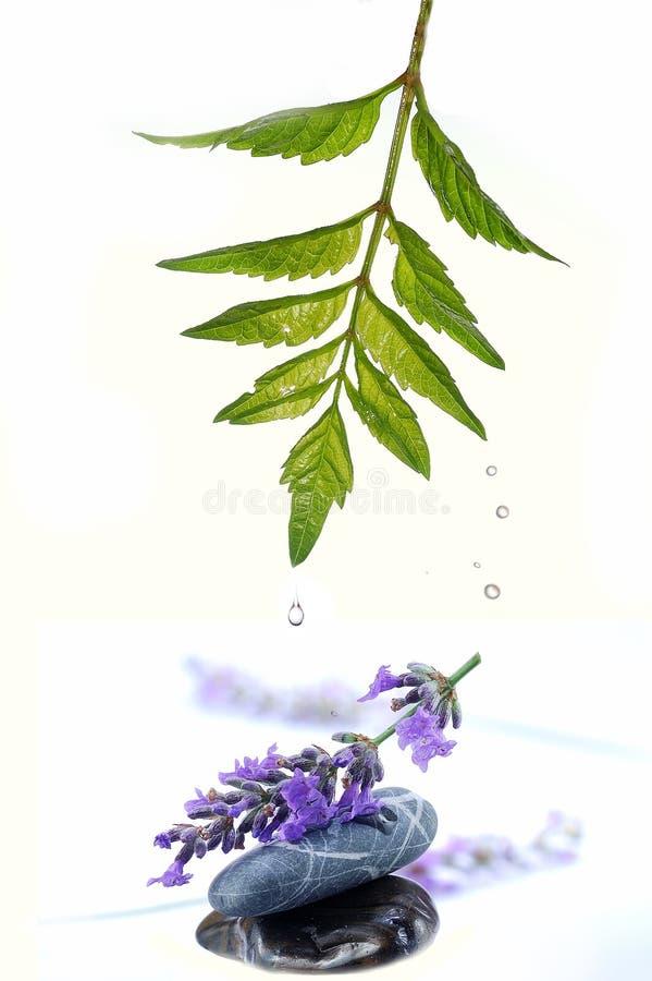 淡紫色飞溅 图库摄影