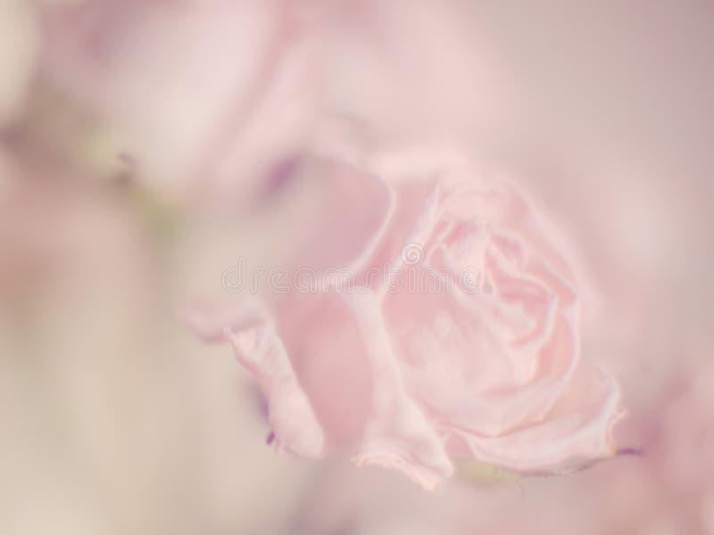 淡色淡粉红色背景或背景文本和问候的 免版税库存图片