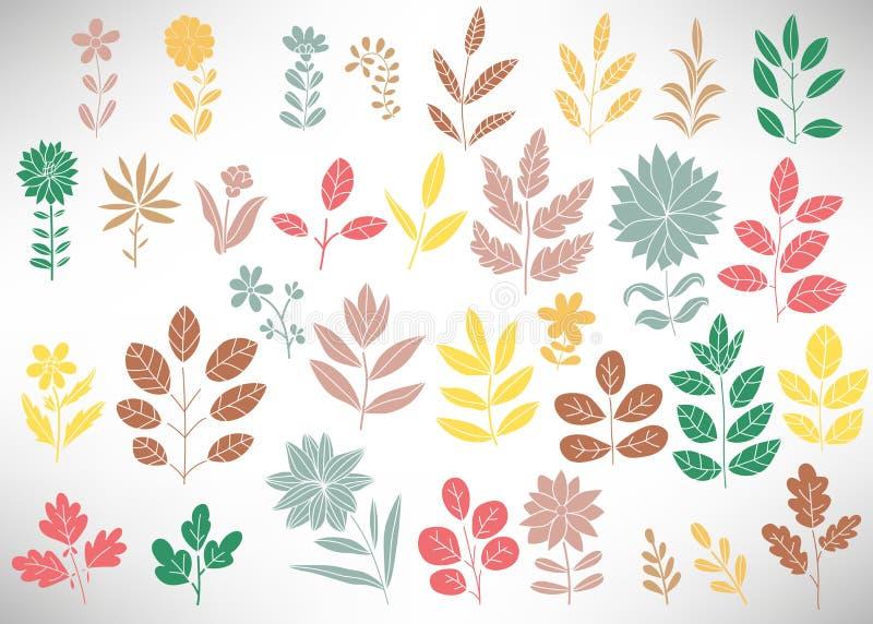 淡色花卉套设计的,树枝,灌木,植物,叶子,花,分支,瓣元素隔绝了 向量例证