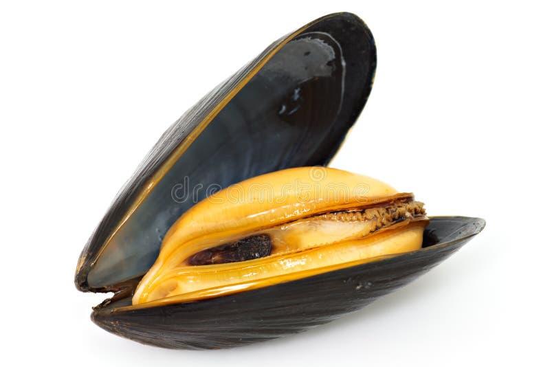淡菜 免版税库存图片