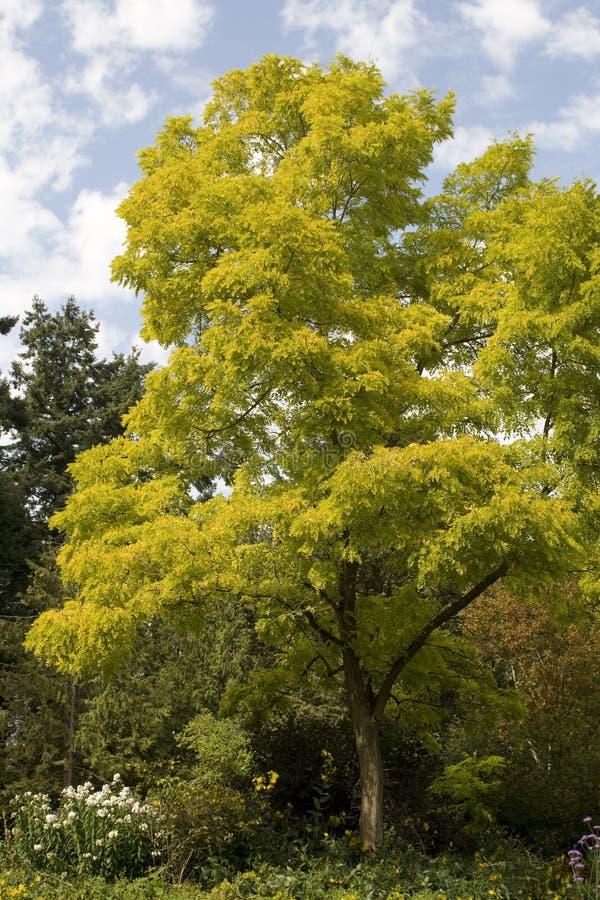 淡黄绿结构树 免版税库存照片