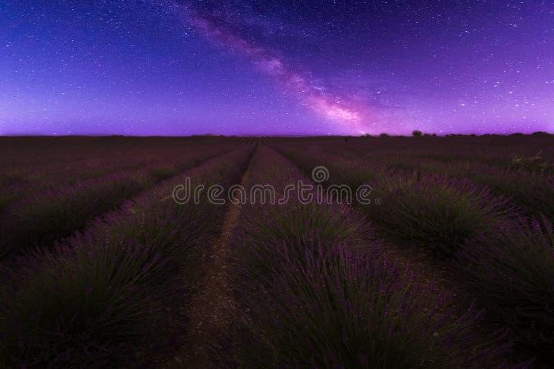 淡紫色在晚上 库存照片