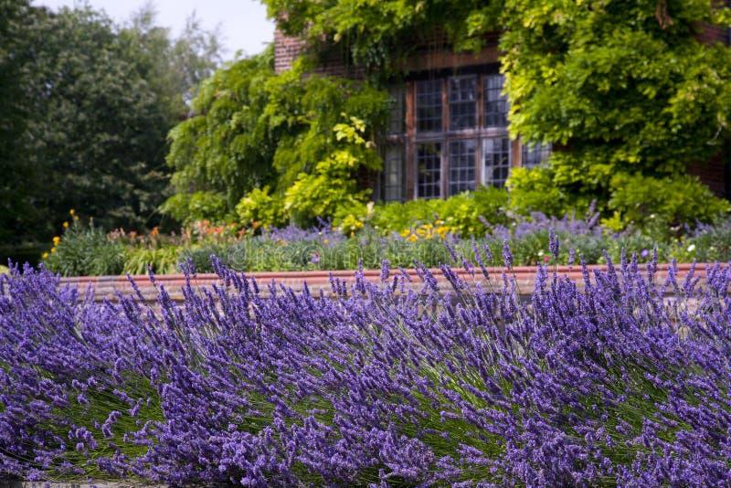 淡紫色庭院 库存照片