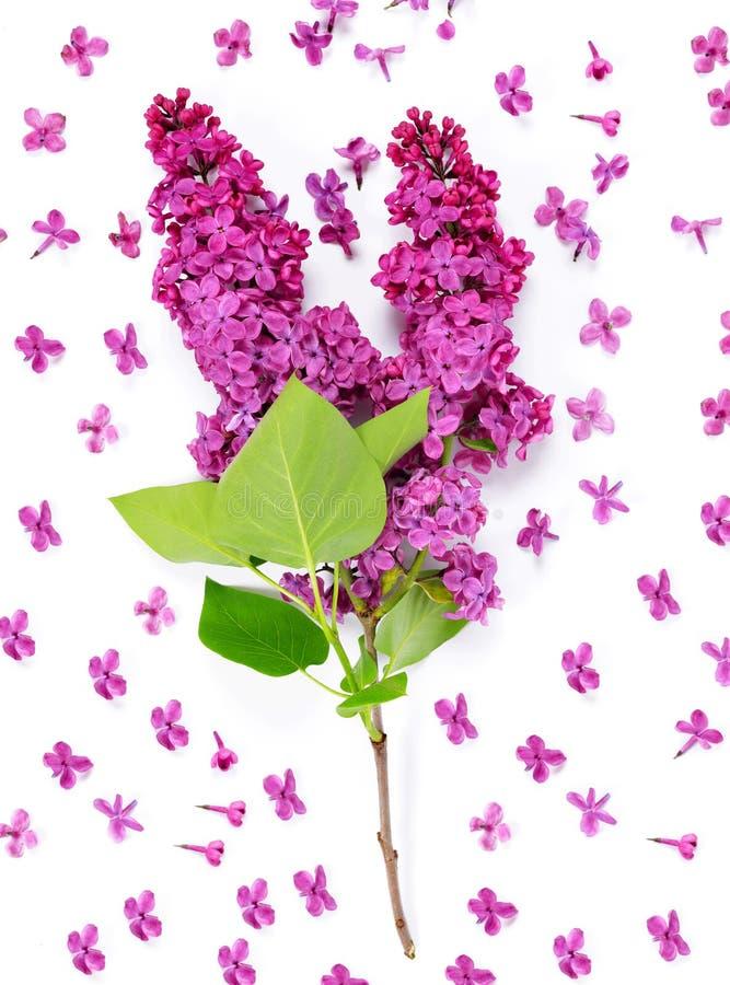 淡紫色开花的花 库存图片