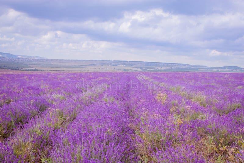 淡紫色的领域反对蓝天的 免版税库存图片