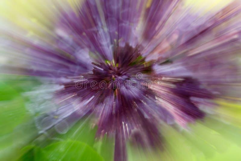 淡紫色花剧烈的爆炸迷离与迅速移动的作用的 免版税库存照片