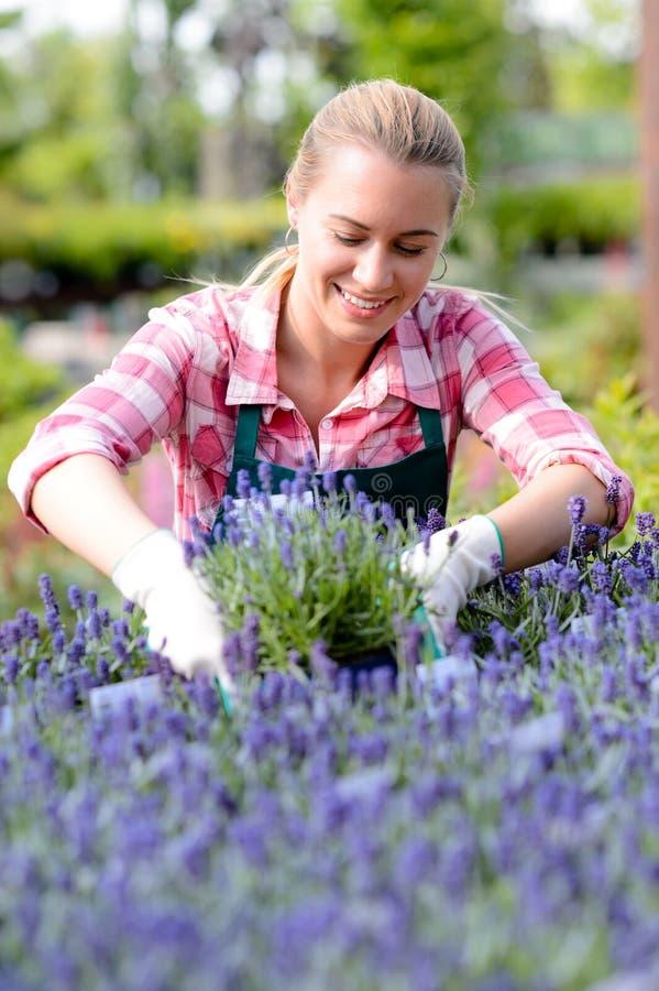 淡紫色花圃微笑的园艺中心妇女 库存图片