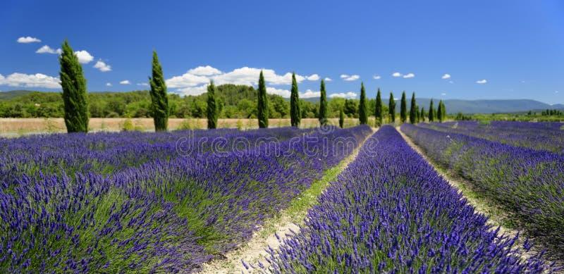 淡紫色领域在普罗旺斯 图库摄影
