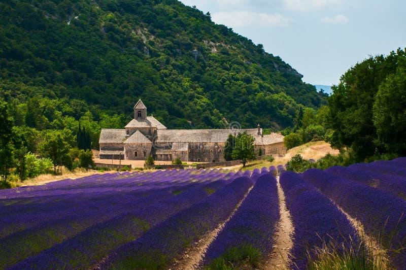 淡紫色领域在Senanque修道院里在普罗旺斯,法国 免版税图库摄影