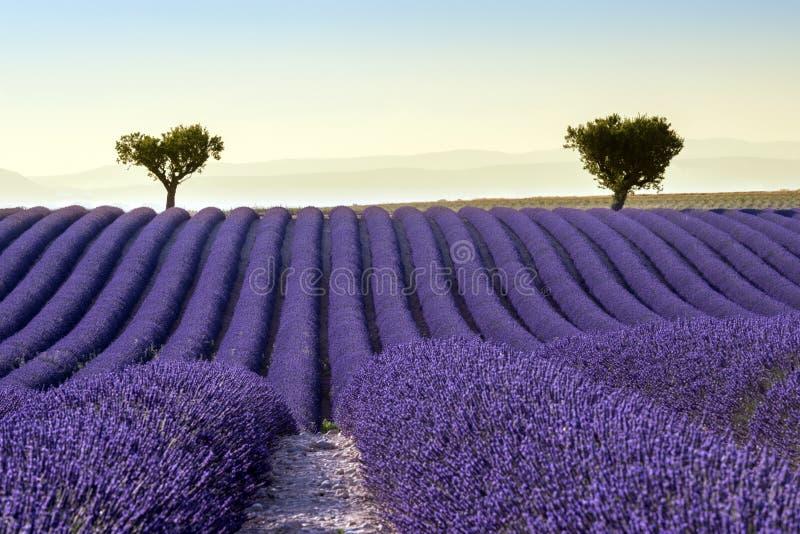 淡紫色领域夏天日落风景 免版税库存图片