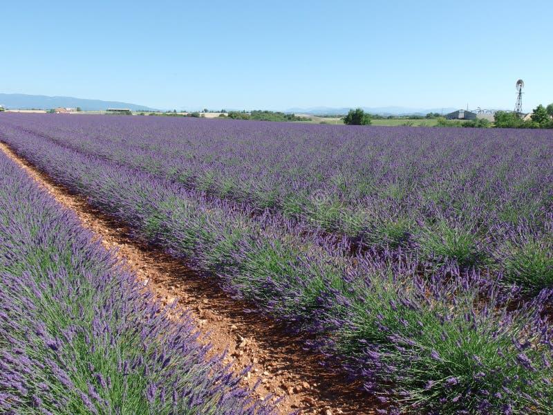 淡紫色领域,普罗旺斯,在法国南部 库存照片