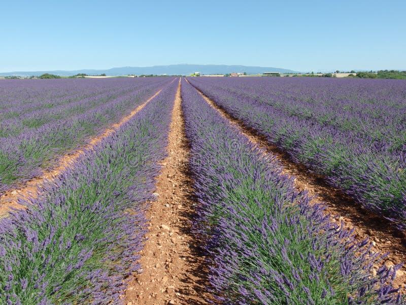 淡紫色领域,普罗旺斯,在法国南部 免版税库存照片