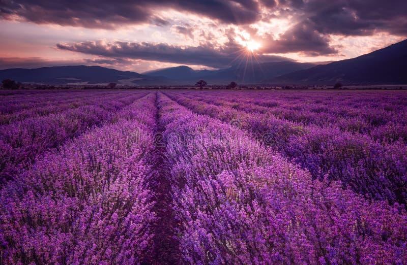 淡紫色领域 淡紫色领域的壮观的图象 夏天日落风景,不同的颜色 黑暗的云彩,剧烈的日落 库存图片