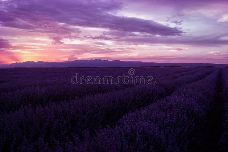 淡紫色领域 淡紫色领域的美好的图象 夏天日落风景,不同的颜色 库存照片