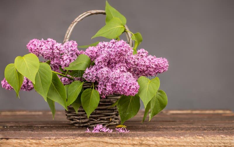 淡紫色紫色 免版税图库摄影