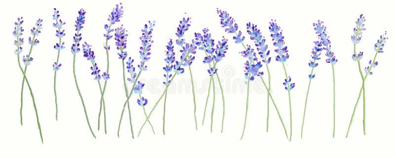 淡紫色 向量例证