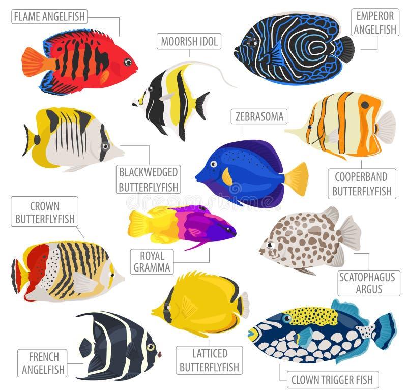 淡水被隔绝的水族馆鱼品种象集合平的样式  库存例证