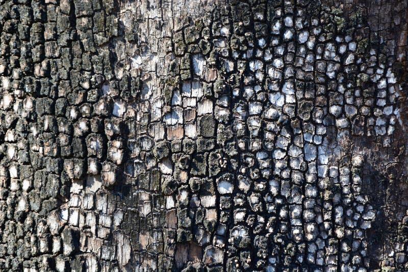 深刻的对比和树皮富有的纹理特写镜头  免版税库存图片
