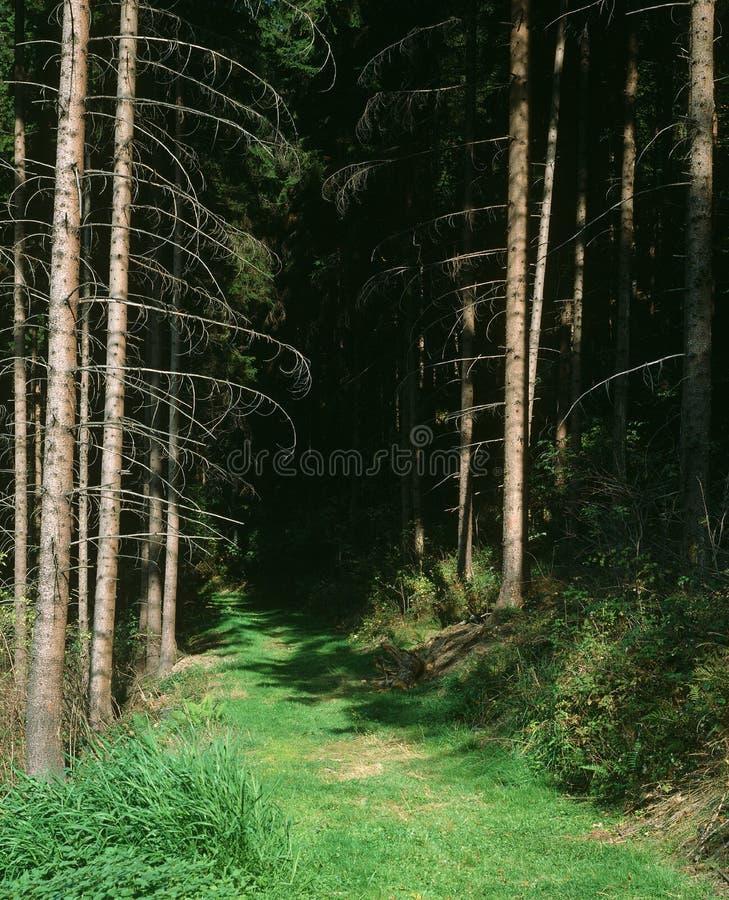 深刻的森林旅途 库存图片