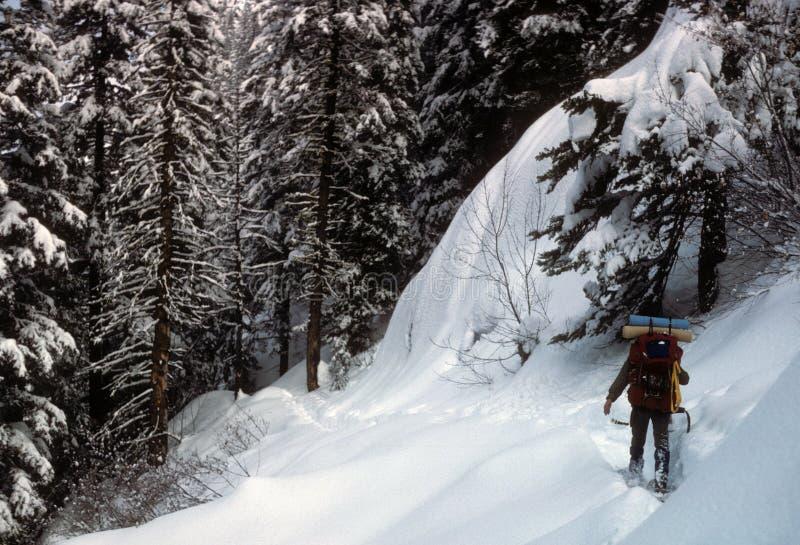深刻的雪snowshoer 免版税图库摄影