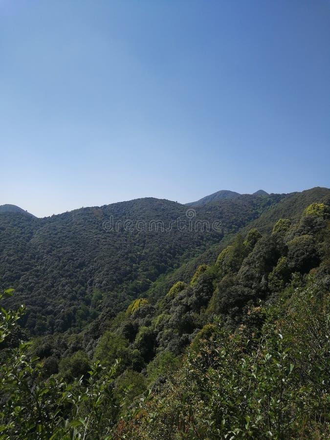 深山和森林,原始的生态环境 免版税库存照片